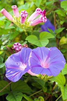 Spain, Mallorca, Flower, Nature, Flora, Garden, Summer