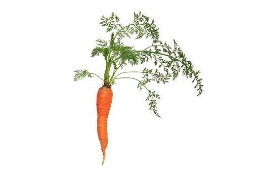 Carrot, Leaf, Flora, Nature, Vegetable, Plant, Natural
