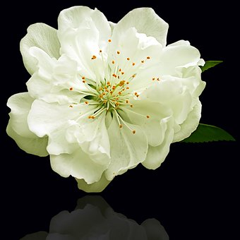 Flower, Plant, Petal, Nature, Floral, White Flower