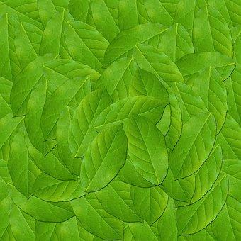 Leaf, Plant, Nature, Green Leaves, Texture, Design
