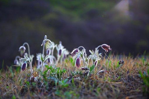 Nature, Grass, Flowers, Plants, Wild, Dawn, Wildflower