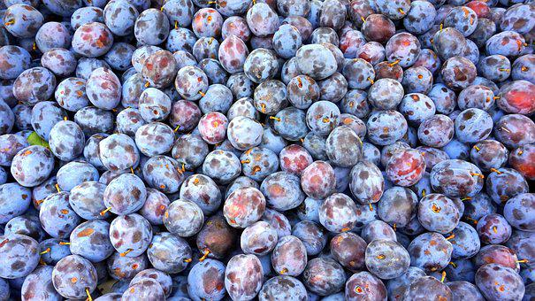Plum, Food, Berry, Fruit, Healthy