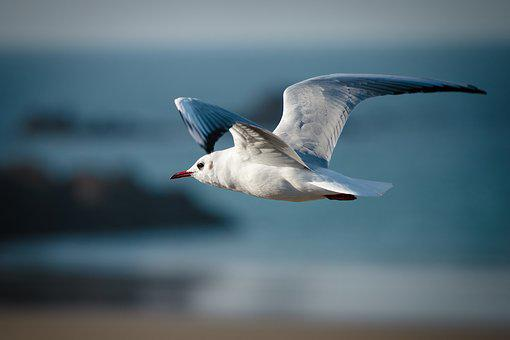 Bird, Nature, Animal World, Seagull, Waters, Seevogel