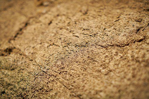 Wood, Tree, Texture, Background, Backgrounds, Abstract