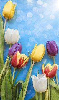 Tulip, Flower, Nature, Easter, Color, Flora, Floral