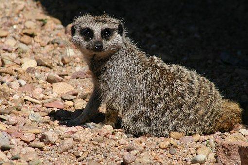 Wildlife, Nature, Animal, Mammal, Cute, Little, Wild