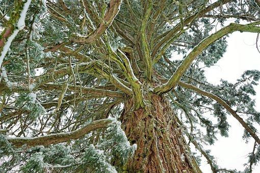 Tree, Nature, Wood, Branch, Plant, Leaf, Landscape