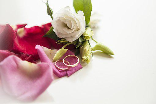 Flower, Rose, Petal, Love Scam, Love, Rings, Wedding