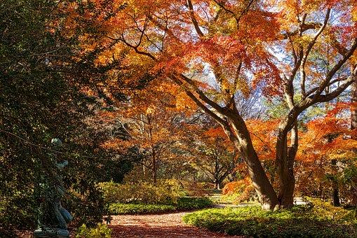 Fall, Tree, Leaf, Season Colors