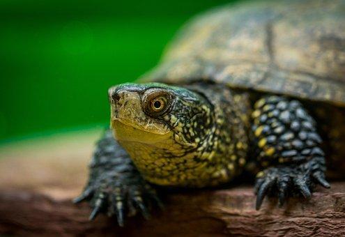 Reptile, Living Nature, Animals, Nature