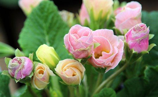 Flower, Nature, Flora, Leaf, Floral, Petal, Bud