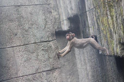 Monkey, äffchen, Baby, Holding, Nature, Zoo, Sweet