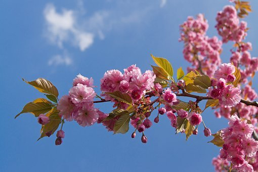 Flower, Plant, Tree, Nature, Flowers, Sunny, Floral