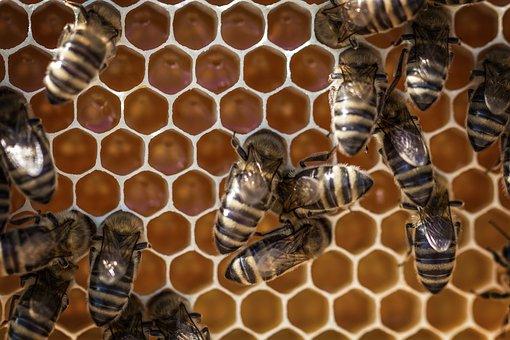 Honey, Beehive, Honeycomb, Beeswax, Bee, Beekeeping