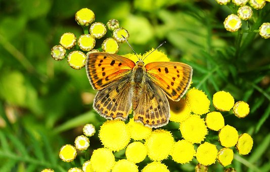 Nature, Flower, Butterfly Day, Insect, Plant, Animals