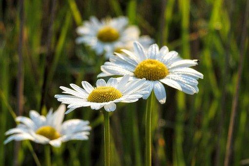 Mage Rites, Wild, Nature, Plant, Summer, Flower, Field