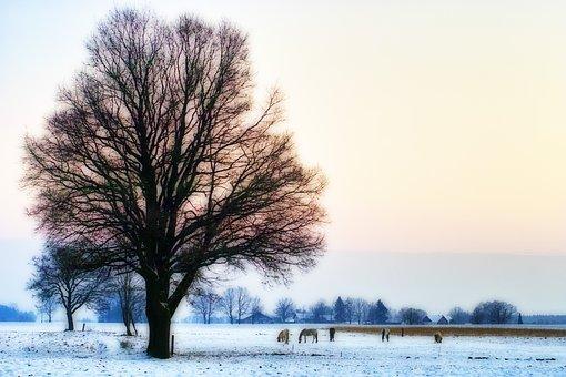 Tree, Winter, Horses, Pasture, Nature, Landscape, Snow