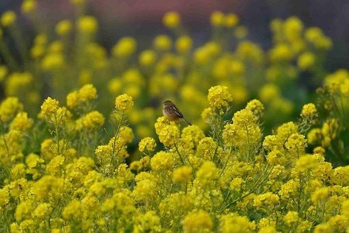 Flowers, Field, Plant