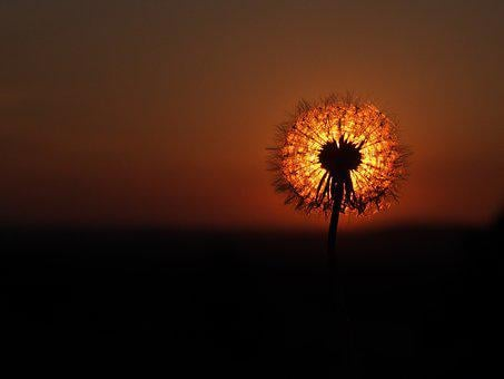 Nature, Sun, Dawn, Sunset, Silhouette, Flower, Bright