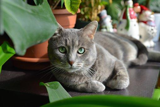 Cute, Pet, Portrait, Cat