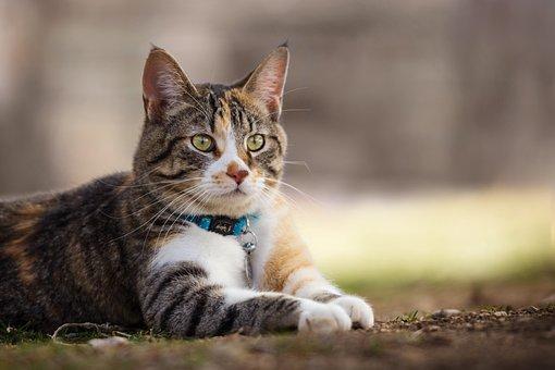 Animal, Cute, Nature, Pet, Cat