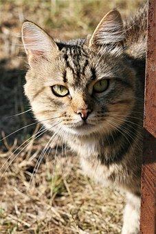 Cute, Animals, Cat, Mammals