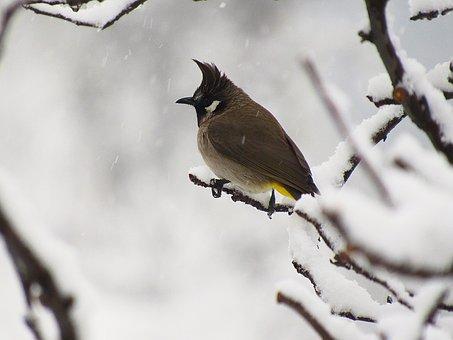 Wildlife, Nature, Bird, Outdoors, Winter, Tree, Snow