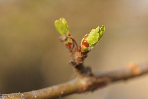 Leaf, Nature, Plant, Flower, Tree, Bud, Spring
