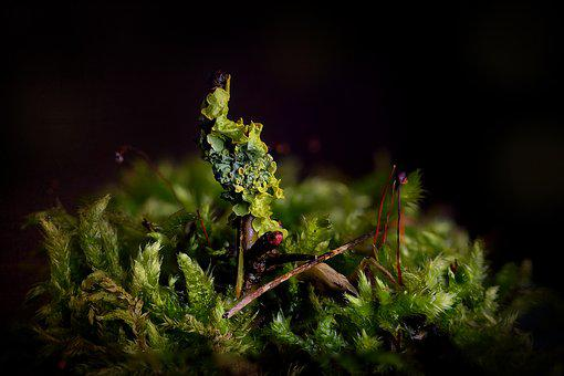 Nature, Sheet, Plant, Outdoor, Moss