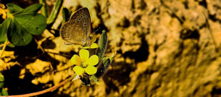 Nature, Outdoors, Flower, Leaf, Flora, Color, Summer