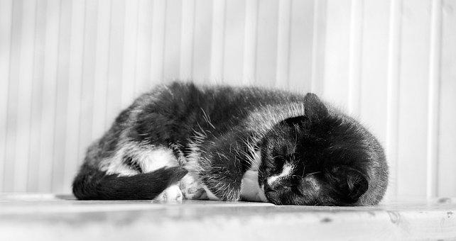 Cat, Kitten, Animal, Lying Down, Pet, Fur, Cute, Kitty