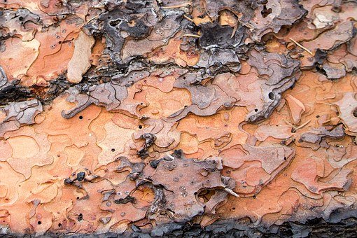 Tree Bark, Puzzle Shapes, Fallen Tree, Fire, Bark