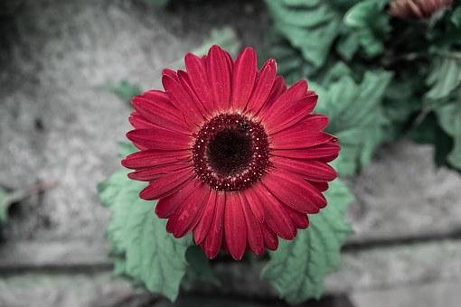 Red, Summer, Garden, Spring, Colorful, Flower
