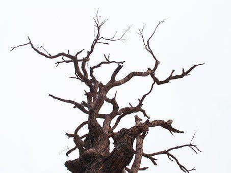 Tree, Dead, Branch, Old, Bough, Big, White, Background