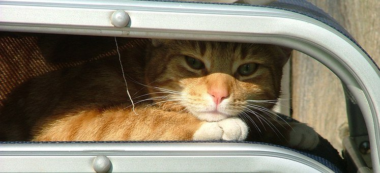 Ginger Cat, White, Tabby, Garden Furniture, Sleeping