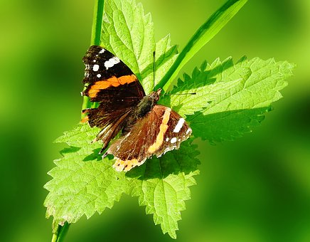 Butterfly, Insect, Nature, Animal World, Leaf, Summer