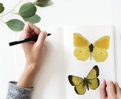 Butterfly, Desktop, Beautiful, Nature, Summer, Aerial