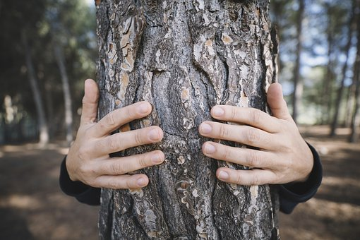 Tree, Nature, Outdoors, Wood, People, Male, Hand, Park
