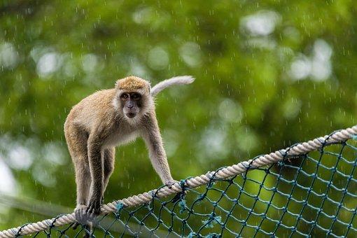 Monkey, Primate, Animal World, Nature, Animal, Mammal