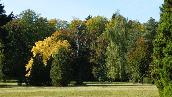 Vrchlabi Castle, Park, Autumn, Trees, Golden Autumn