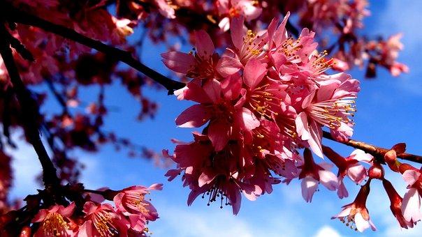 Season, Nature, Tree, Branch, Flower Spring Forward