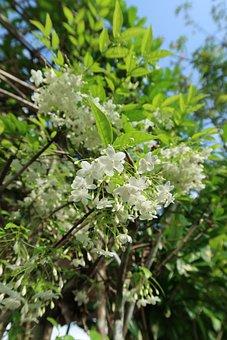 Tree, Flora, Nature, Branch, Season, Summer, Outdoors
