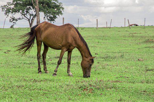 Animal, Horse, Field, Lawn, Grass, Landscape, Nature