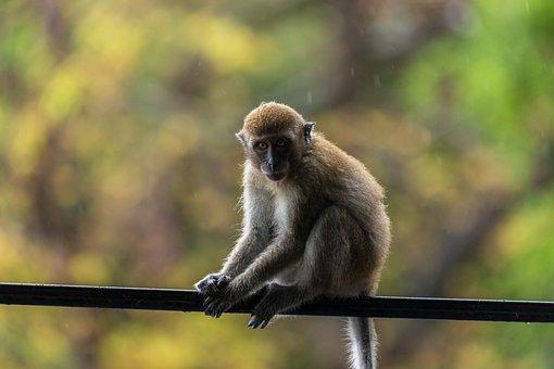 Monkey, Animal World, Primate, Nature, Animal, Thailand