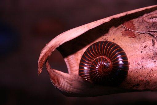 Invertebrate, One, Nature, Seafood, Spiral, Approach