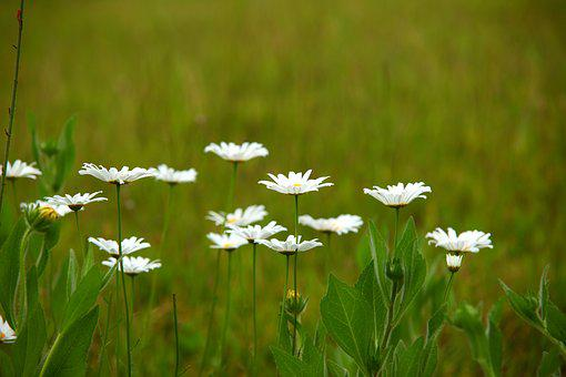Nature, S, Grass, Plants, Hayfields, Wildflower
