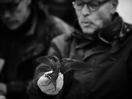 Portrait, Man, Swallow, Bird, Black And White, Flight