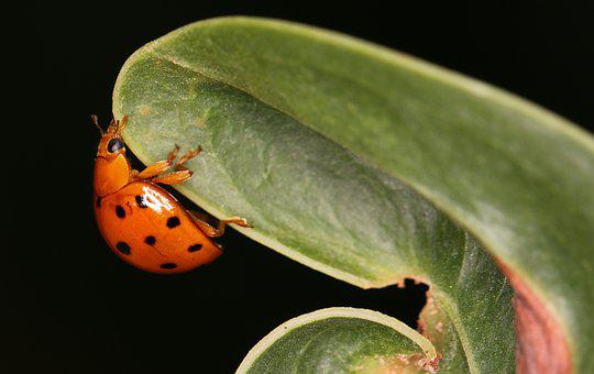 Nature, Biology, Leaf, Insect, Flora, Closeup, Wildlife