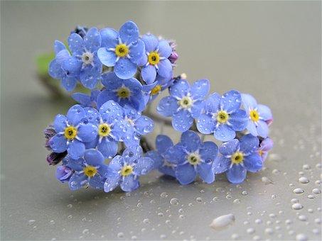 Flower, Nature, Flora, Floral, Color, Petal, Closeup