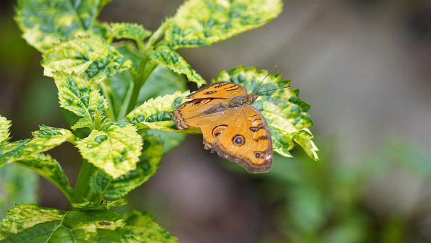 Nature, Leaf, Outdoors, Flora, Insect, Garden